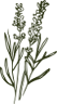 Banner produtos BioEssência